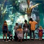 SIP-Zoo-Aquarium-Tacoma-WA5.jpg